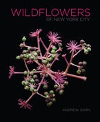 Wildflowers of New York City